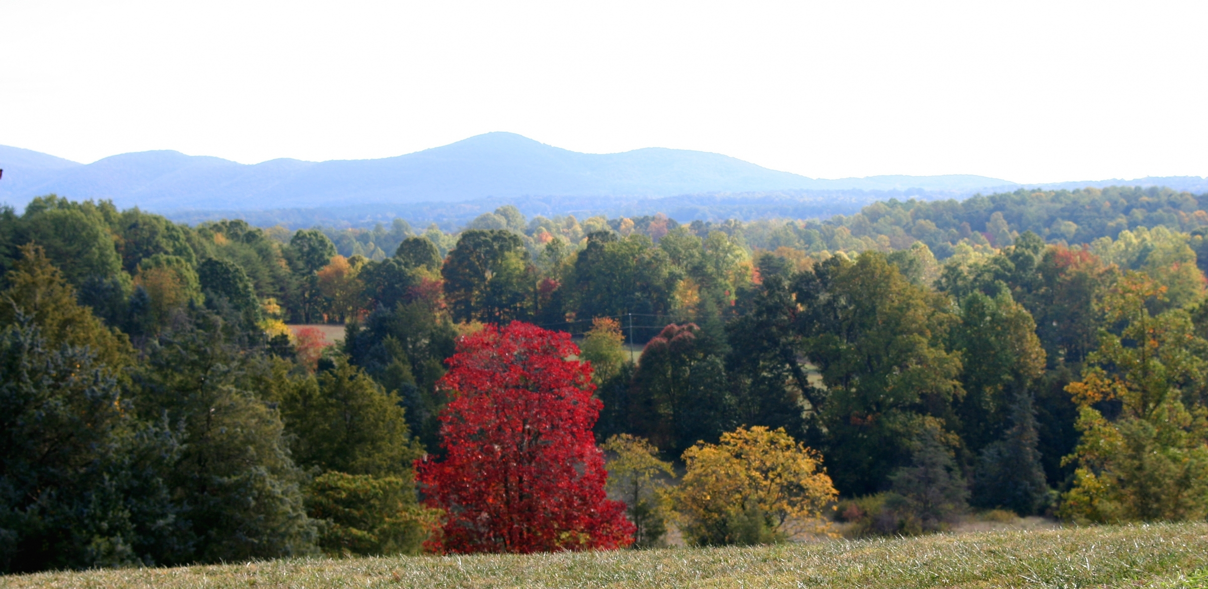 a photo taken to honor gorgeous diversity - here a lone maple sparks brilliant Vermilion in the morning sunshine after the first frost of autumn at Smith Mountain Lake in Franklin County Virginia - taken by builder Timber Ridge Craftsmen Inc.